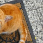 Cat Meow Meanings - A cat meows by his food bowl