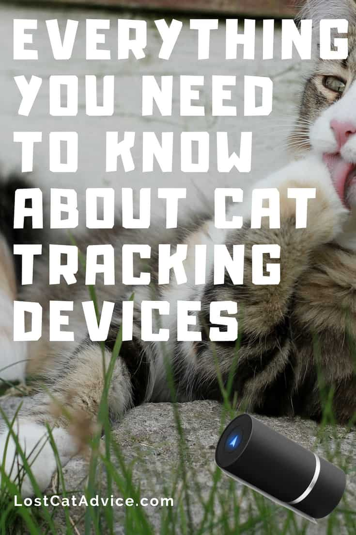 Everything you need to know best cat tracking devices