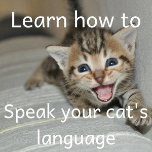 Learn how to speak cat