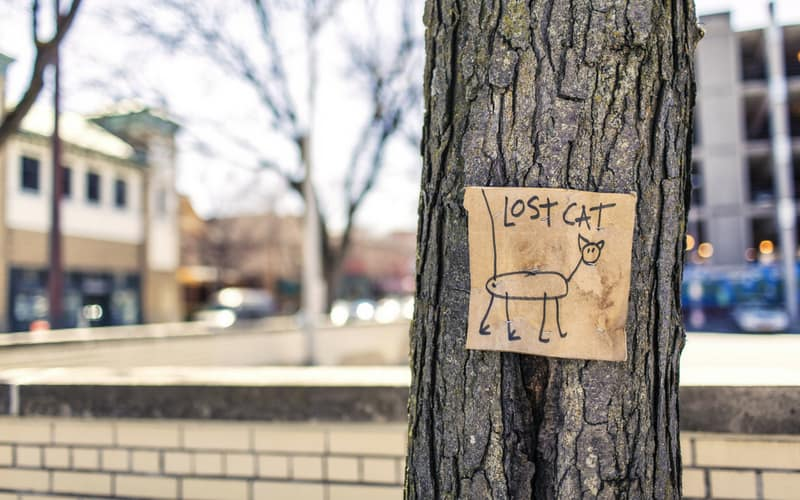 Lost cat sign on tree