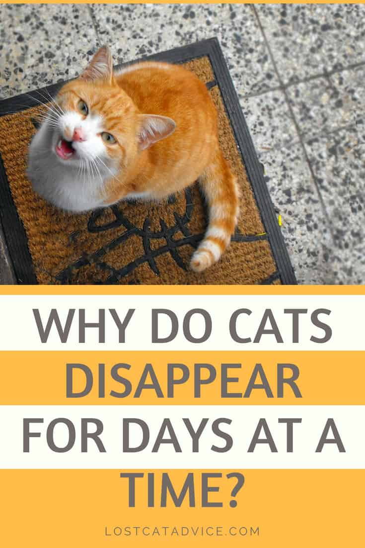 Why do cats disappear for days?