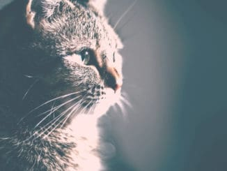 What to do if you find a lost cat