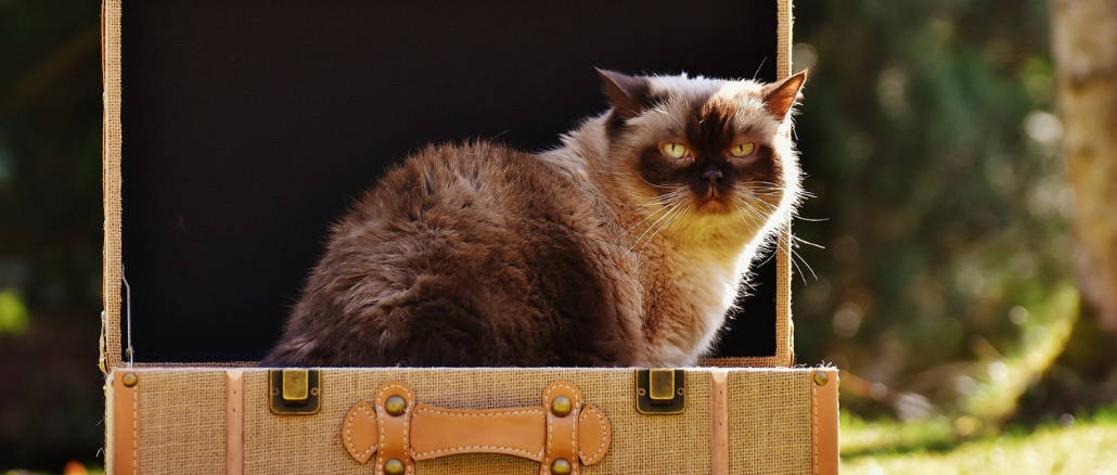 What to do with your cat when you travel