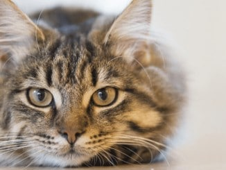 Best Cat Trackers: Best Cat Tracking Devices & GPS Collars 2020